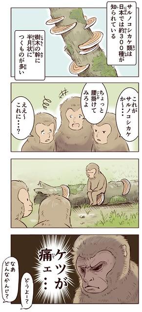 サルノコシカケ
