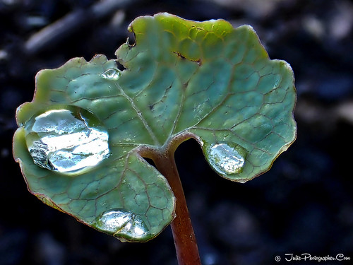 Tiny green leaf droplets | by Julie Vause Photographer