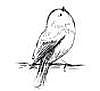 cotton bird Deutschland