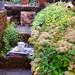 My Garden Secret Delights