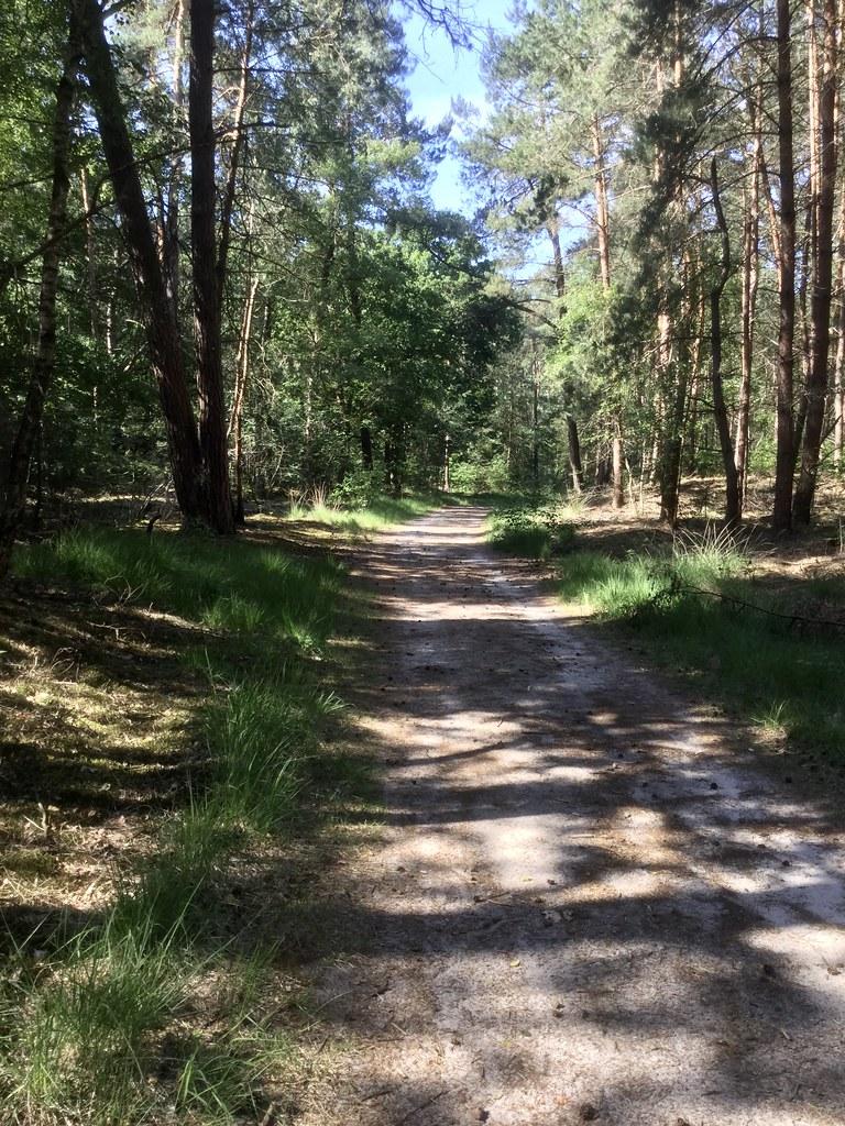 midden in het bos