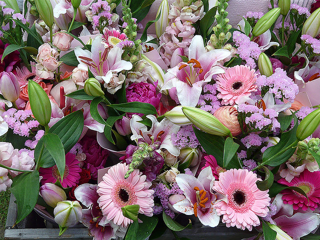 Profusion of Pink