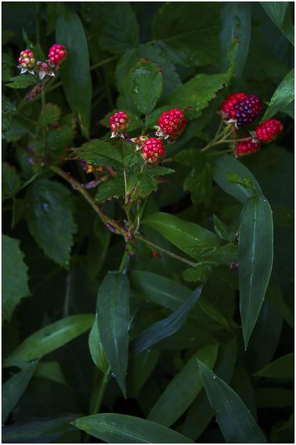 A Few Small Berries