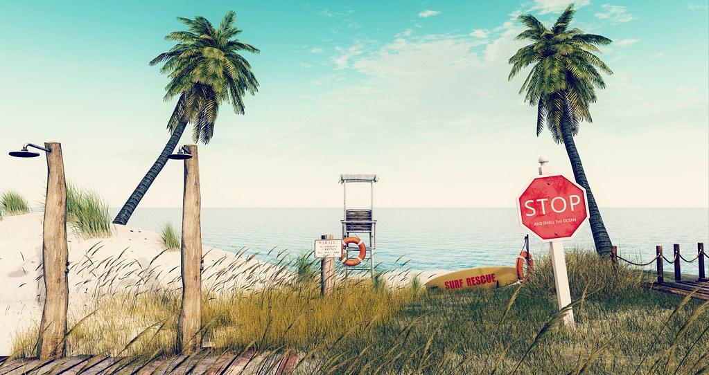 Palm Trees Ocean Breeze...