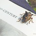 Shield Bug on Book
