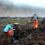intertidal surveys_Cascade Head_4