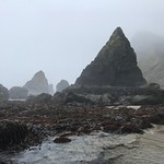 intertidal surveys_Cascade Head_10