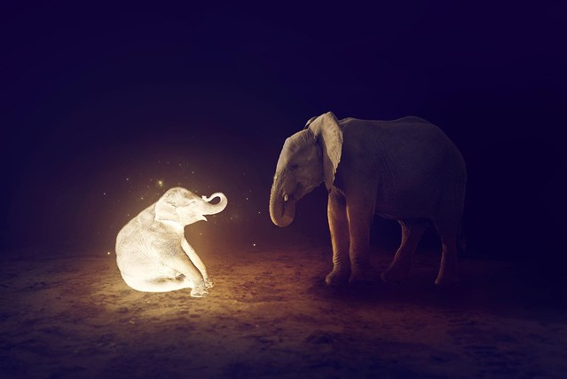 They say that somewhere in Africa the elephants have a secret grave where they go to lie down, unburden their wrinkled gray bodies, and soar away, light spirits at the end.  ~Robert ~McCammon