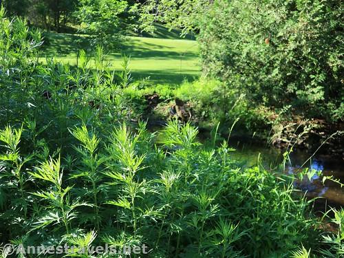 Weeds along Mill Creek, Webster Park, New York