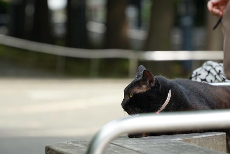 Sony α7Ⅱ+TAMRON 28 200mm f2 8 5 6 Di Ⅲ RXD東池袋中央公園の猫だまり 黒
