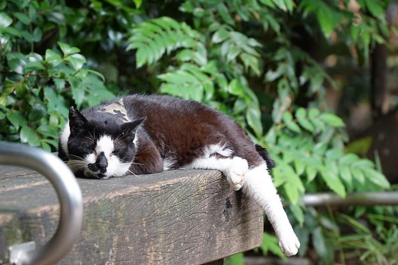 Sony α7Ⅱ+TAMRON 28 200mm f2 8 5 6 Di Ⅲ RXD東池袋中央公園の猫だまり 黒白八割れ
