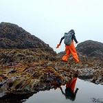 intertidal surveys_Cascade Head_8