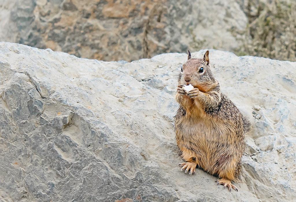 Beach Squirrel with Popcorn