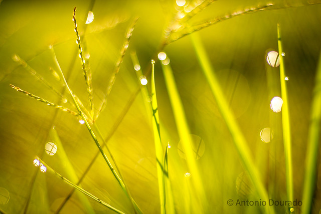 [Jardins da quarentena] Meus encantos são  silenciosos e acontecem nas frestas.