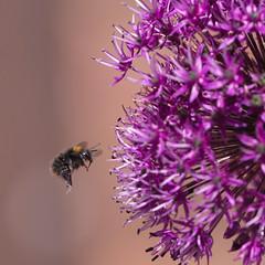 Pollen Probe