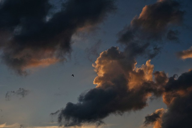 Swallow in the sky