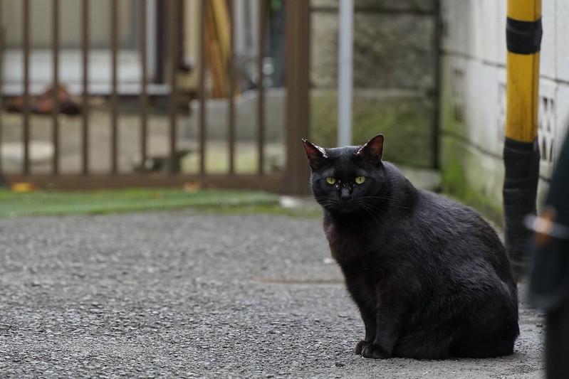 Sony α7Ⅱ+TAMRON 28 200mm f2 8 5 6 Di Ⅲ RXD池袋一丁目児童遊園の猫 黒