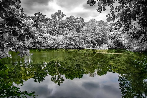 shuttleworth oldwarden bedfordshire uk swissgarden garden lakeview reflection nikond750 tamron28300divcpzd