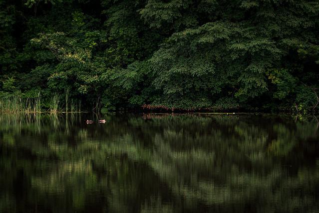 新緑水鏡ーGlassy surface of water of the fresh green