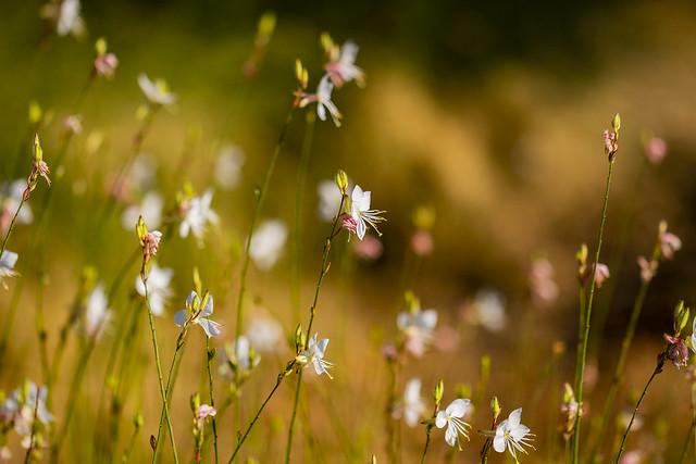 Summer flowers in the park, Madrid, Spain