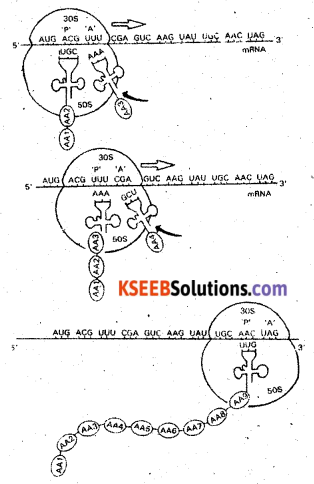 2nd PUC Biology Previous Year Question Paper March 2016 Q28.1