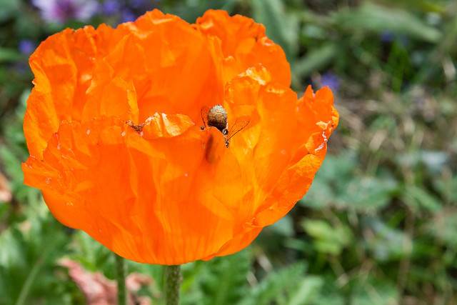 Bee toochie.
