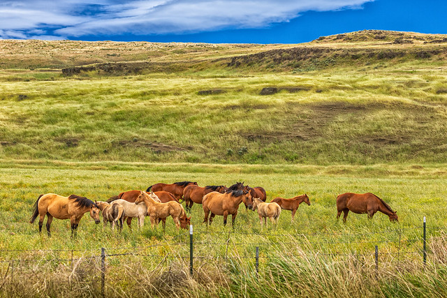 Horses of the Palouse - Explore