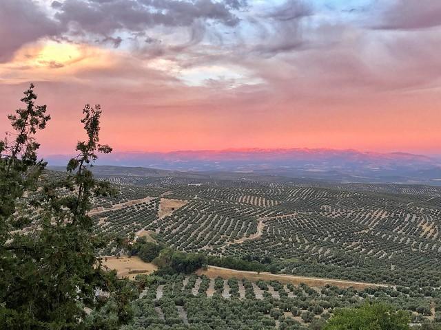 Atardecer en los cerros de Úbeda (Jaén)