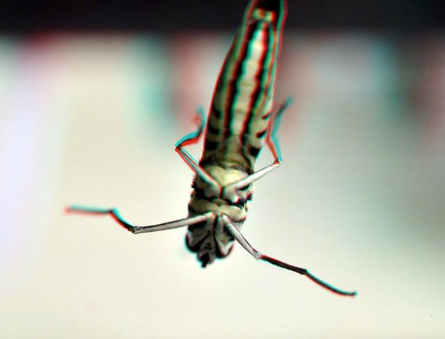 Vlinder Amazonica Blijdorp Zoo 3D