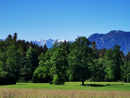 Meadow Pasture Field Alps Upper Bavaria Germany © Feld Wiese Berge Bayern Oberbayern ©