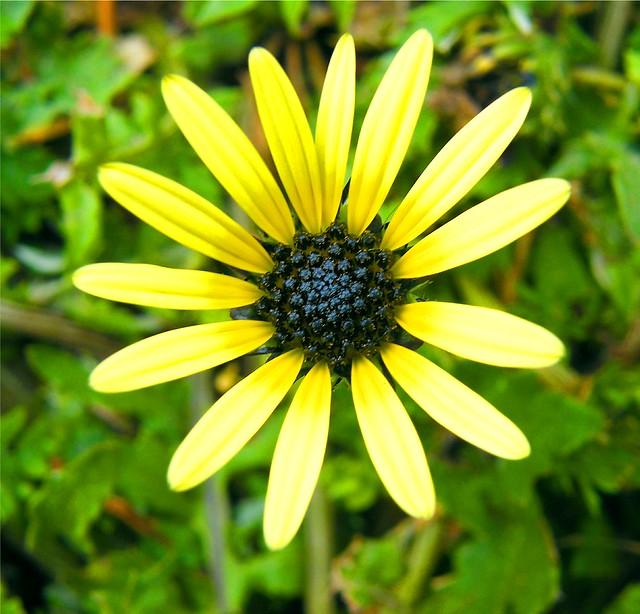 Yellow Propeller Flower