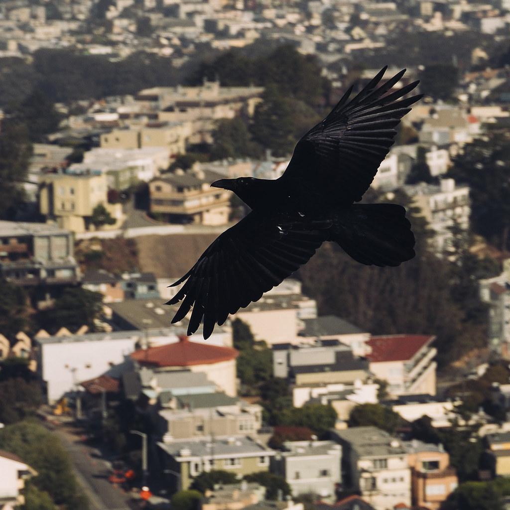 san francisco raven 05