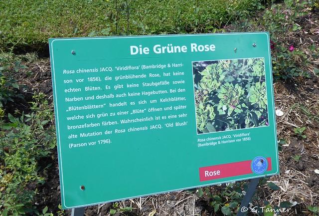 Rosarium Sangerhausen 2020 06