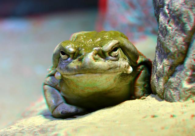 Toad Blijdorp Zoo Oceanium Rotterdam 3D
