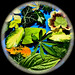 Leafy circle