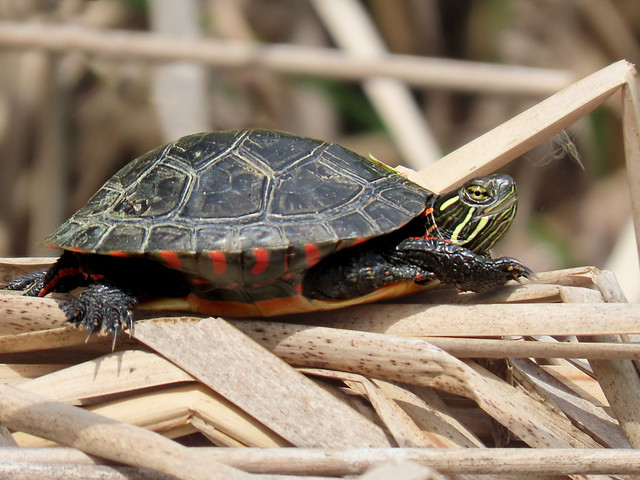 Have a turtley great weekend!