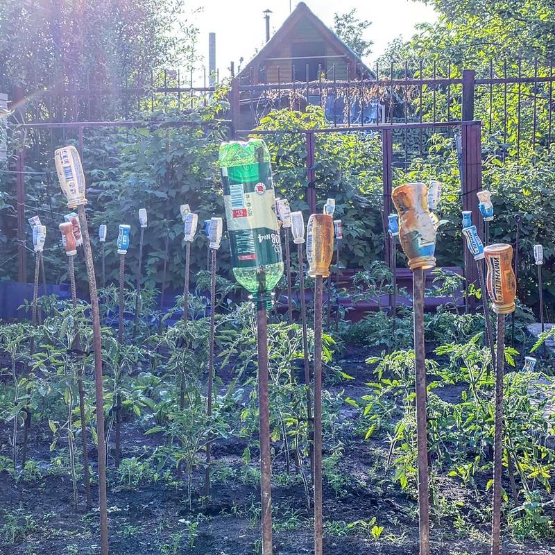 Огород в июне