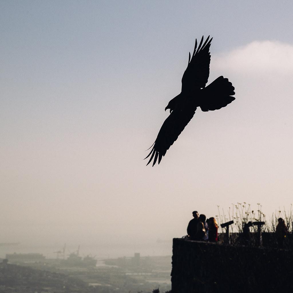 san francisco raven 07