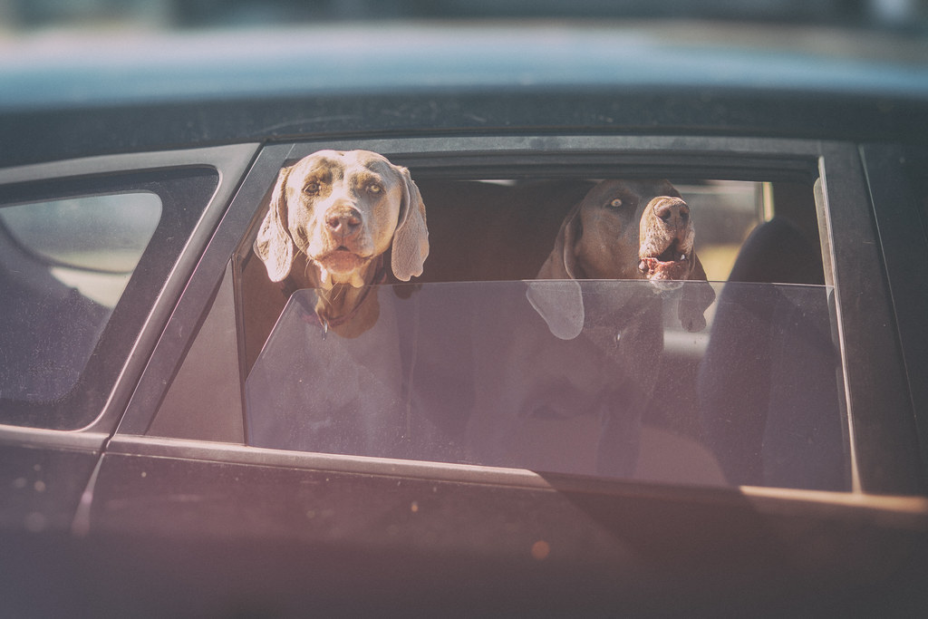 Two Dogs in Marfa Texas