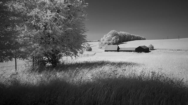 Summer Grasslands