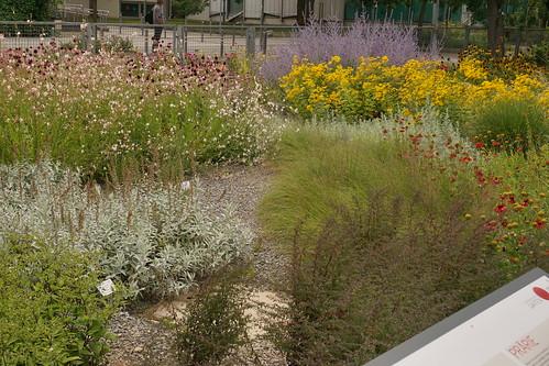 Prairie-Garten