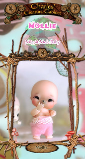 CCC Mollie mole baby preorder release
