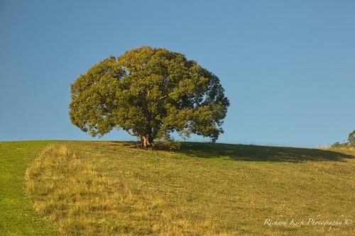 australia queensland cedarpocket tree hill landscape wood winter nature