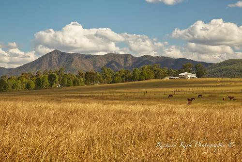 australia queensland widgee landscape mountain meadow field grass trees horses farm