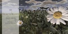 The Little Branch - Daisy Field - Wanderlust Weekend, 50L