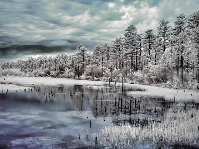Infrared Shot of Blackwater River State Park, FL