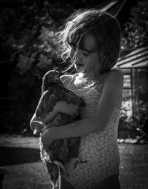 Cuddle a chicken day