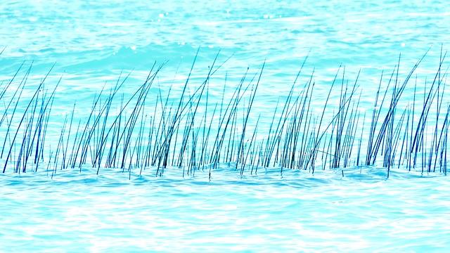 Lake Grass @ Noon