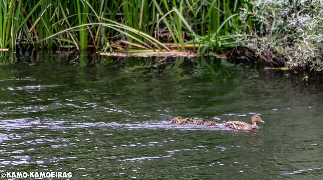 nadando en familia isla del soto2