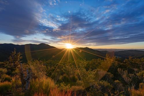 ilce7m2 sony 2020 sunrise sun flare light nature newzealand nz holdsworth tararua bush outdoors wairarapa